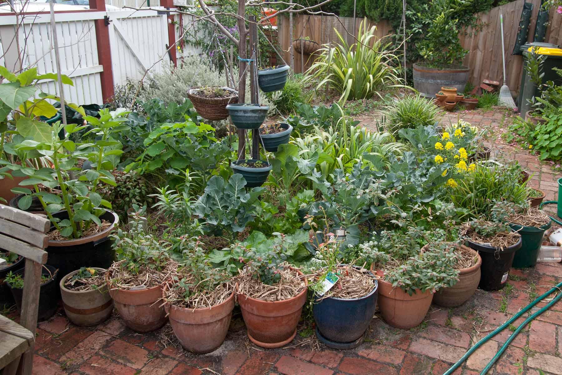 vegetable penny u0027s garden a harvest beyond my front door page 3